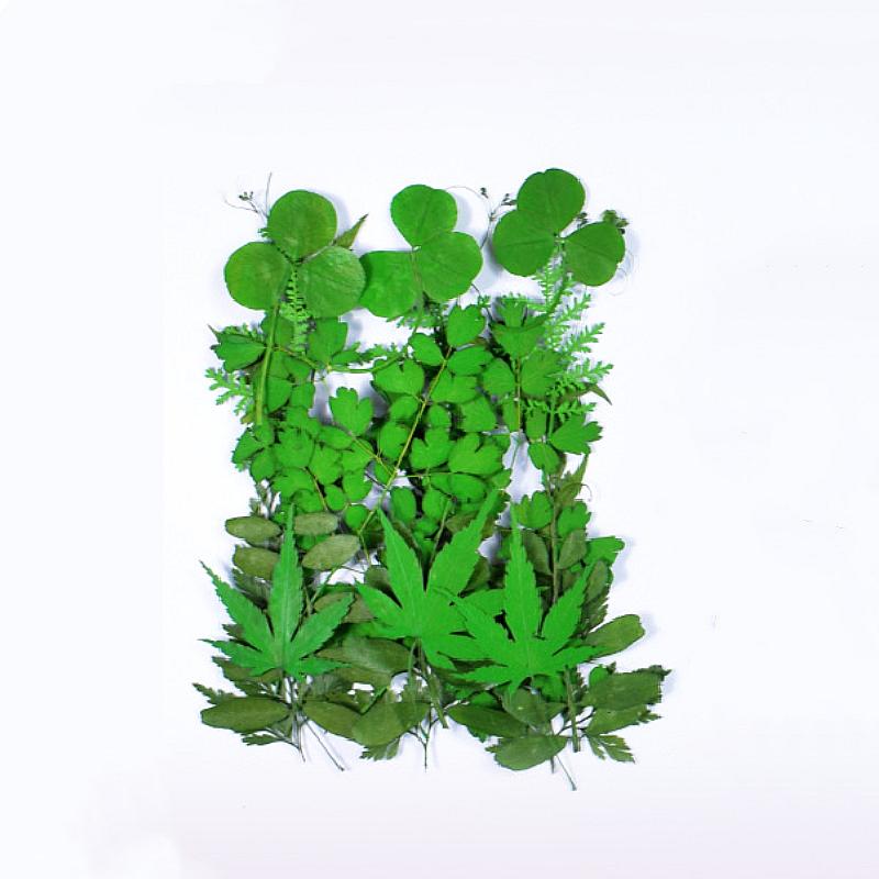 تشكيلة ورد مجفف أخضر